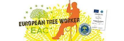 Logo Tree For Life