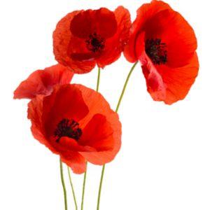 Logo L'Atelier Floral De Chevreuse