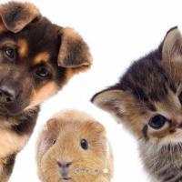 Cabinet Vétérinaire des Alizés - ILLZACH