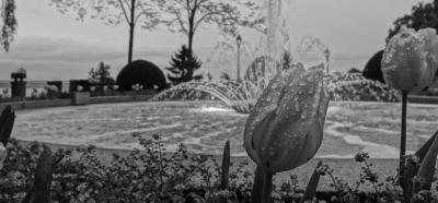 Faure Elsa - Avocat - Thonon-les-Bains