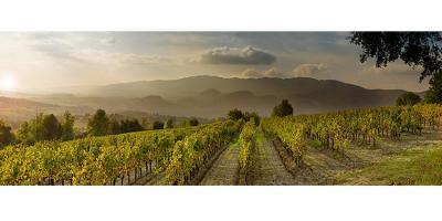 Les Coteaux de Grambois - Producteur et vente directe de vin - Grambois