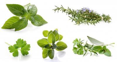 Midiflore Herbes Aromatiques & Fleurs Comestibles - Commerce en gros de fruits et légumes - Hyères