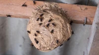 Stop Guêpes & Frelons - Destruction de nids de guêpes et frelons - Mérignac