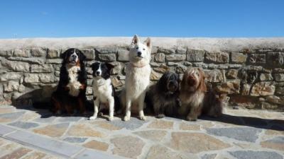 Animascool - Comportementaliste Canin - Dressage d'animaux - Toulouse