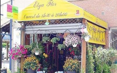 Elya Flor - Fleuriste - Toulouse