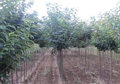 Pépinière Fruitière de la Lande - Production de graines et semences - Laulne
