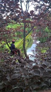Arbor Environnement SARL - Paysagiste - Vulaines