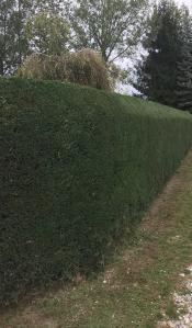 Gardenview - Paysagiste - La Balme-de-Sillingy