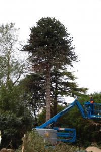 A Chacun Son Jardin - Aménagement et entretien de parcs et jardins - Perros-Guirec