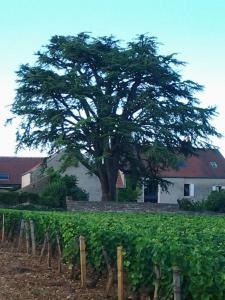 Assistance Aux Arbres Et Jardins - Entreprise d'élagage et abattage - Nuits-Saint-Georges