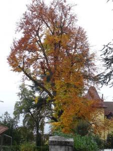 Arboristik Ludovic Peyreaud SASU - Entreprise d'élagage et abattage - Thonon-les-Bains