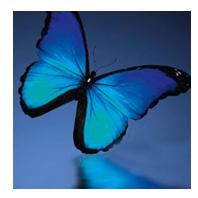 Sandrine Delaporte - Psychothérapie - pratiques hors du cadre réglementé - Libourne