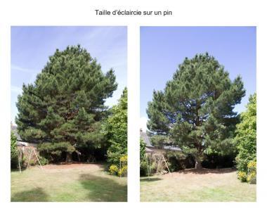 Terre Et Cimes - Entreprise d'élagage et abattage - Montauban