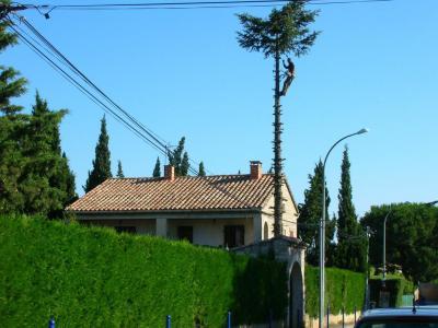 Elagu-art - Entreprise d'élagage et abattage - Avignon