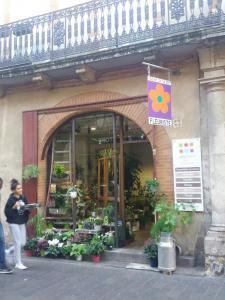 Alocasia - Fleuriste - Toulouse