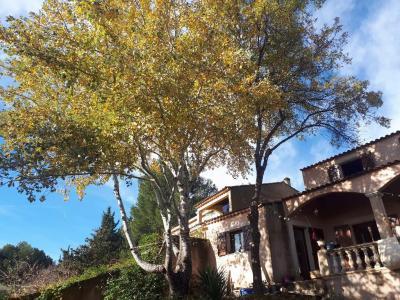 Azur-Arbre - Aménagement et entretien de parcs et jardins - Hyères