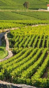 Belemkadem Prestations Viti - Matériel viticole - Beaune