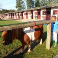 Centre Equestre D'Ambazac - AMBAZAC