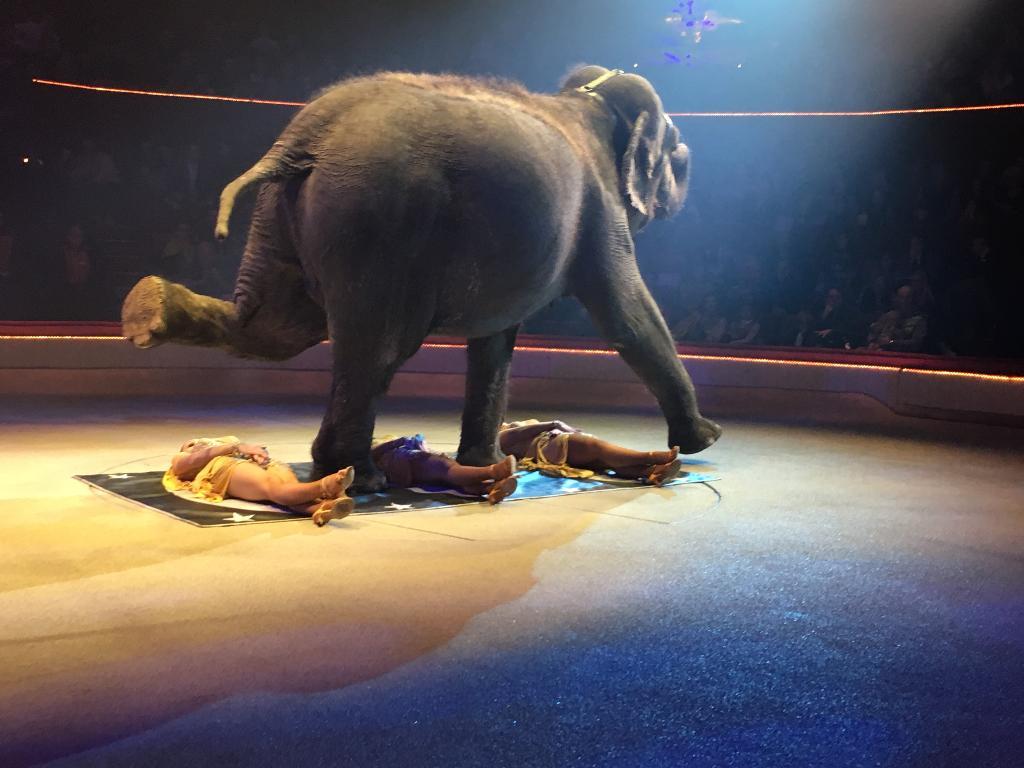 Cirque d'Hiver Bouglione Paris - Cirques (adresse, avis)