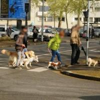 Dog Educ 18 - SAINT DOULCHARD