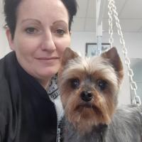 Dogs Services - BOUVILLE