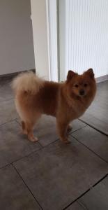 For My Dog - Toilettage de chiens et de chats - Pontgouin