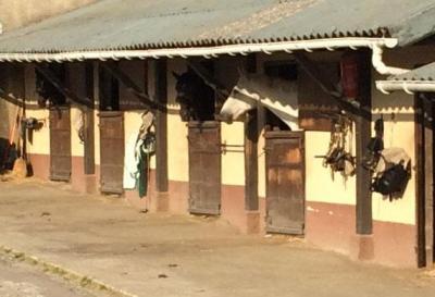 Haras de la Croix d'Heuland - Élevage de chevaux - Douville-en-Auge
