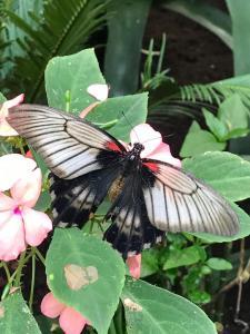 Jardin aux Papillons - Attraction touristique - Vannes