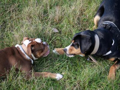 Jo & Dog - Dressage d'animaux - Roquettes