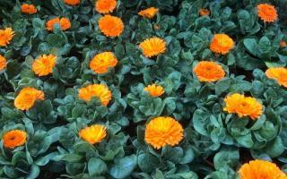 Carrefour de la fleur Avion - Jardinerie (adresse, horaires, avis, ouvert le dimanche)