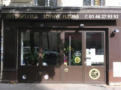 Lophyl Fleurs - Fleuriste - Paris