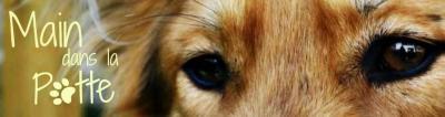 Main Dans La Patte - Dressage d'animaux - Toulouse