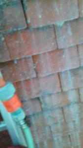 Mundwiller Rénovation - Entreprise de démoussage et de traitement des toitures - Caen