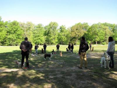 Paul Anthony Educateur Canin Comportementaliste - Dressage d'animaux - Toulouse