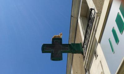 Pharmacie De La Madeleine - Pharmacie - Poitiers