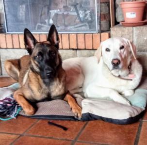 Sur le bout des pattes - Toilettage de chiens et de chats - La Marre