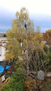 Sur Un Arbre Perché E.I.R.L - Travaux d'accès difficile - Corbeil-Essonnes