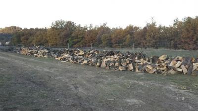 Travaux Forestiers Cévennes Clairs - Entreprise d'élagage et abattage - Alès