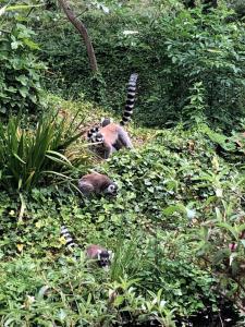 Zoo Des Sables - Parc animalier et zoologique - Les Sables-d'Olonne